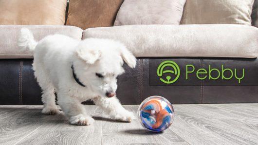 Pebby la balle connectée pour ton animal de compagnie